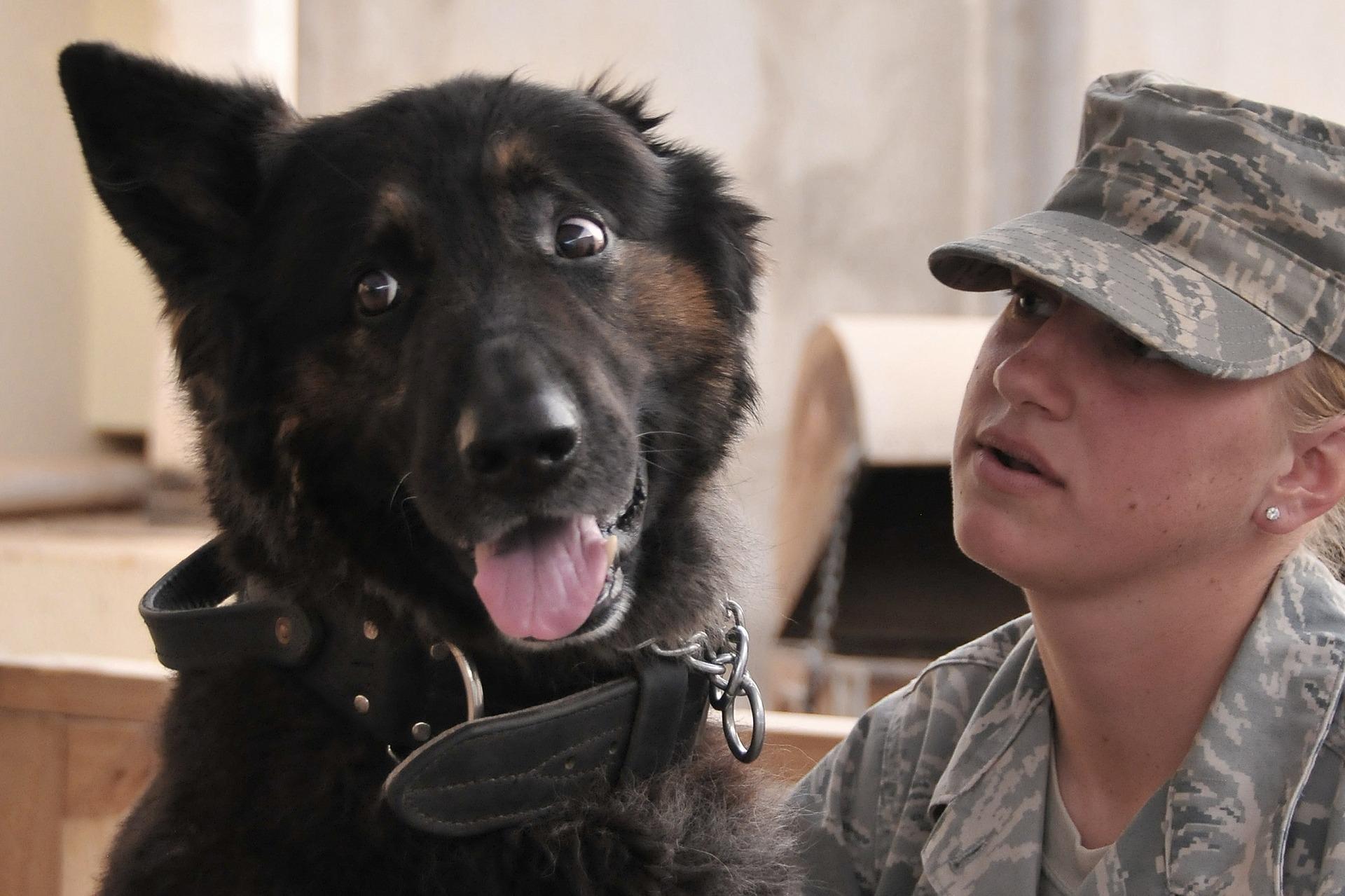Service Dog with Solder